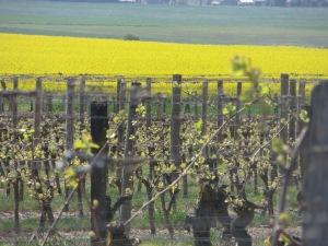 vigne avril 15